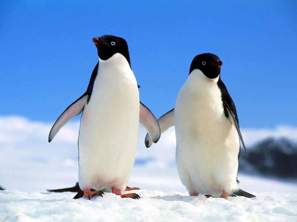 casal gelada